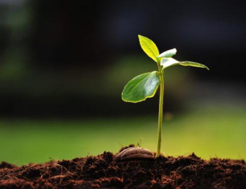Planting Seeds.  Watering Seedlings.