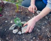Gardening - Managing Poor Performance