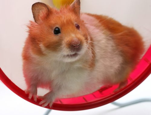 Get off the Hamster Wheel: Slow Down to Speed Up